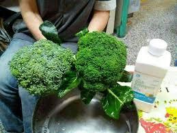 Atomy dish detergent effects to wash vegetable